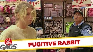 Fugitive in a Bunny Suit Prank