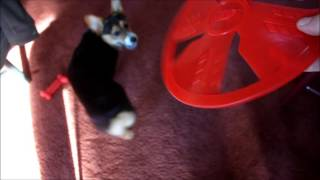"Nerf Dog ""Float Flyer"""