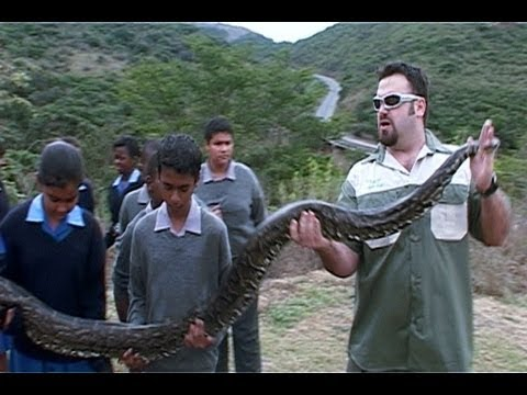 African Rock Python Attacks Cameraman