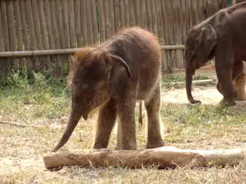 Surprised Baby Elephant
