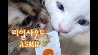 고양이 간식먹방 ASMR 리얼사운드(no talking) Cat eating real sound 猫食べる姿リアルサウンド