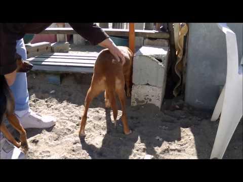 Animalinneed: Video of Estrella, Mimosa and Anuk