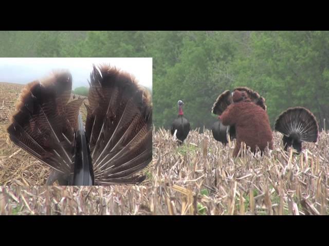 Bigfoot kills a turkey