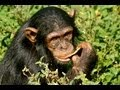 Volunteering at Chimp Eden Jane Goodall Institute South Africa