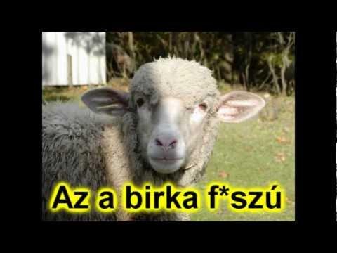 Michel Telo - Bara Bara Bara Nyelvrokonság (félrehallott) video