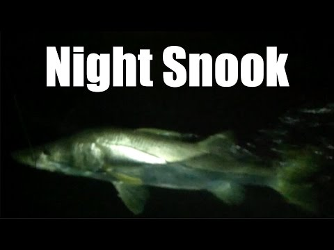 Night Snook Fishing with Captain Jeff