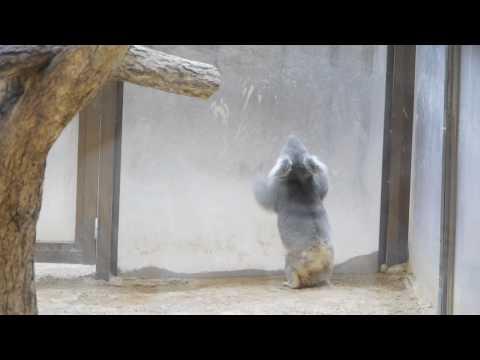 2010年4月6日 東山動植物園 - コアラ 3