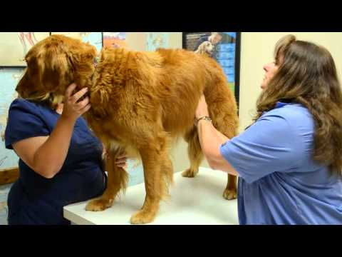 Veterinary Physical Exam