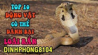 10 Động vật có thể đánh bại Rắn Hổ Mang Chúa