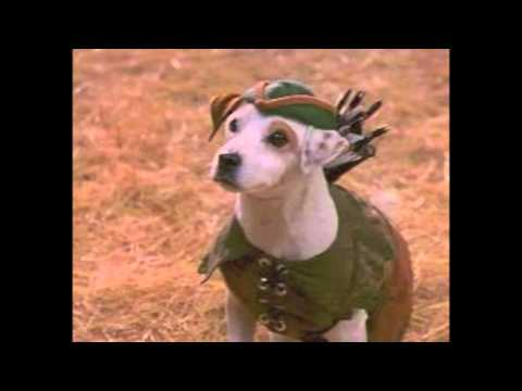 Jack Russell Terriers trailer