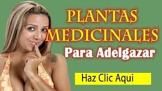 Plantas Medicinales para Adelgazar - Plantas Naturales para Bajar de Peso