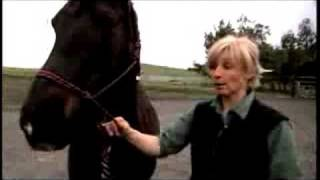 Correcting Horse Behavior with Psychology
