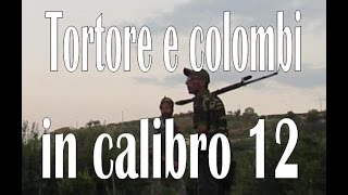 "CACCIA:Tortore e Colombi in calibro 12""dove hunting NINACC HIUNT"
