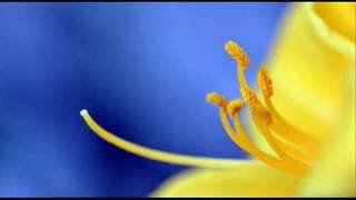 L. Boccherini: Fandango - Quintet for strings, guitar & castanets n. 4 in D major (G. 448) / Savall
