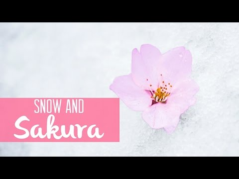 Snow Falls During Cherry Blossom Season in Tokyo!