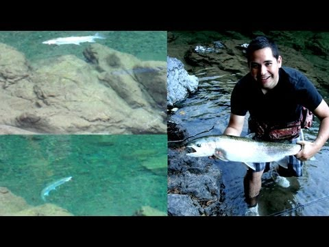 Amazing Fishing!!! - Summer Steelhead Fishing A 'Secret' River - Trout Fishing Vancouver Island B.C.