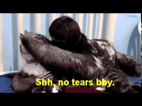 Rapist sloth gif