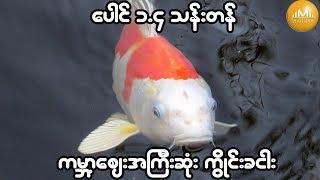 ကမၻာ့ေစ်းအၾကီးဆံုး Koi Carp ငါးကို ေပါင္ ၁.၄ သန္းနဲ႕ ေလလံဆြဲ ၀ယ္ယူ