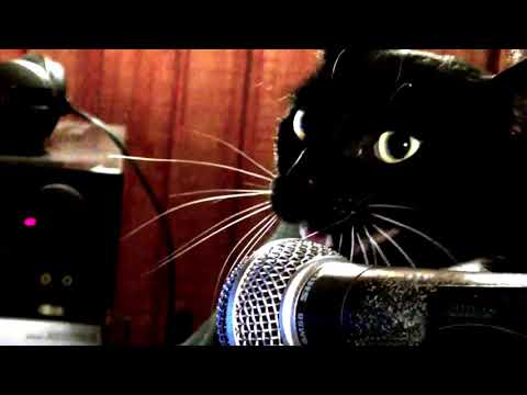 Just can't get enough | Cat Cover | Depeche Mode