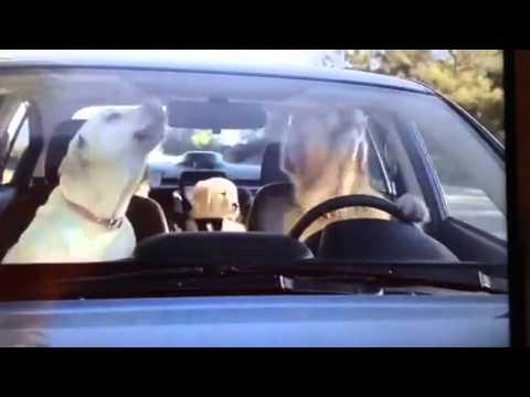 Family Of Golden Retrievers Subaru Commercial Youtube