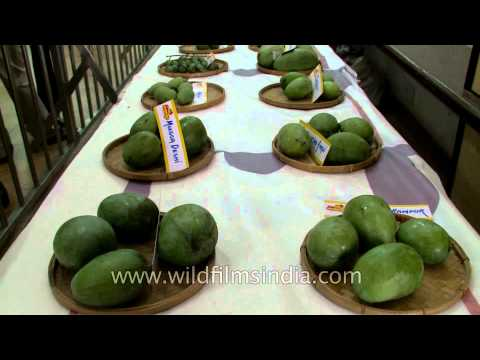 Mangoes for sale and display at Mango Fest