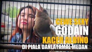 SUARA BURUNG : Cewe Sexy Godain KAcer Bule Albino Di Piala Danlatamal Medan