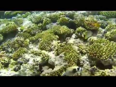 snorkeling in tiran island red sea sharm elsheikh south sinai egypt