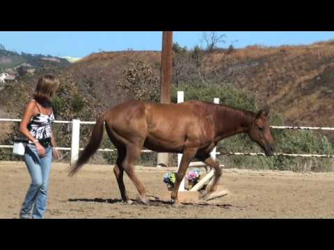 Clicker Trained Horse Remembers after 7 years!