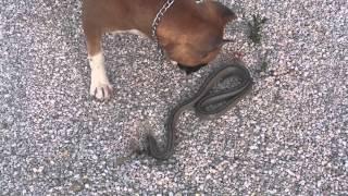 (1.38 MB) Змея без головы Mp3