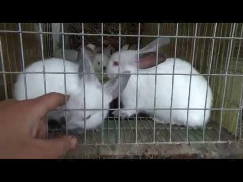 Чуток о кроликах и немного философии))