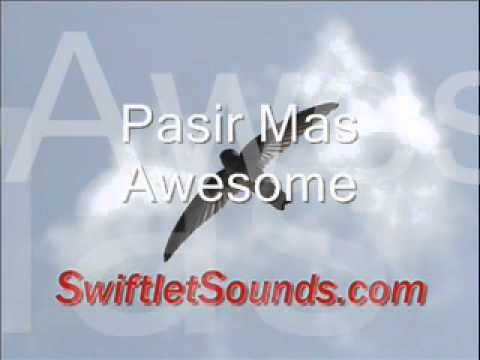 Swiftlet Sounds - Pasir Mas Awesome External Sound video