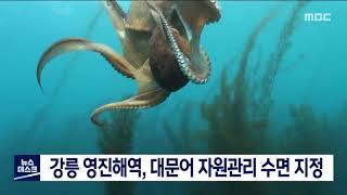 투/강릉 영진해역, 대문어 자원관리 수면 지정예정