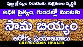 health tips in telugu|సామబియ్యం|health benefits of samalu|little millets|greencross health