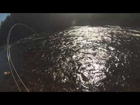Miramichi Salmon Fishing