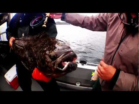 Fly Fishing Halibut with Wild Alaska Cruises and Sportfishing