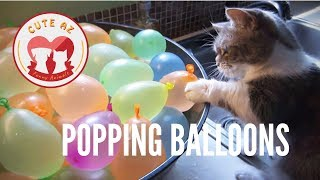 Magic Balloons and Cute Pets 🎈 Funny Pets Popping Balloons compilation 2019