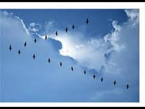 Why do birds fly in a V formation in Japan ?