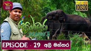 Sobadhara - Sri Lanka Wildlife Documentary | 2019-10-11 |Ali Manthara