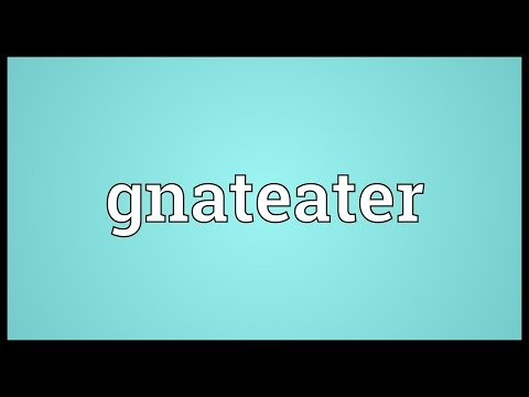 Header of gnateater