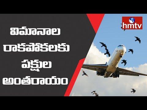 విమానాల రాకపోకలకు పక్షుల అంతరాయం | Vijayawada Airport | Telugu News | hmtv