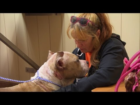 Tia and Sugar Hill Rescue a Badly Beaten, Blind Dog