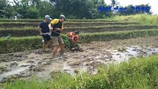 Diesel tiller di lahan sawah