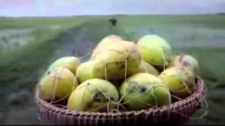 সেলিম ভাই রাসুর নাটোর  প্রাণ  জুস
