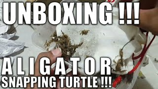 UNBOXING AST | Aligator Snapping Turtle !!!