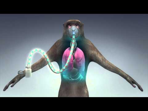 Inhalable Ebola vaccine shows promise in animal tests