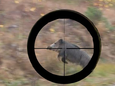 WILD BOAR AND RED DEER HUNTING  ONLY HIT SHOTS COMPILATION Chasse Jakt JAGD