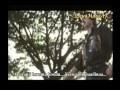 Musi Musi Navvulalona With Lyrics Brahma 1992 Bappi Lahari Flv mp3