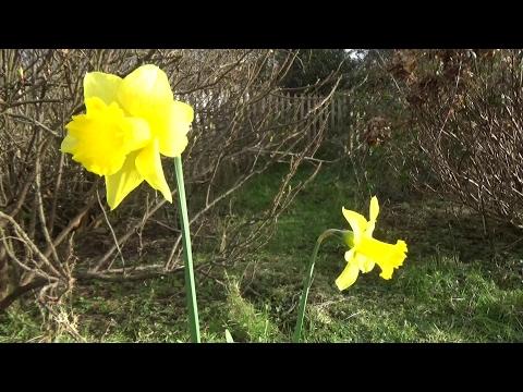 Unser Gartenjahr - Frost und erste Blumen im Februar