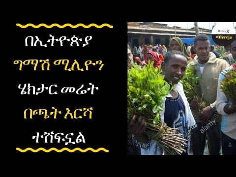 Khat covers half million hectares in Ethiopia
