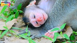 Congratulation! Jane monkey give birth newborn baby | So Adorable pink face | Monkey Daily 2044